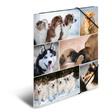 HERMA Sammelmappe A4 Pappe Hunde
