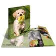 HERMA Sammelmappe Glossy Tiere A3 PP Hunde