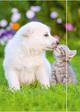 """RNK Zeichenmappe """"Hund & Katze"""""""